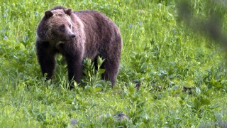 Hunter mauled to death by grizzly bear at national park in Alaska