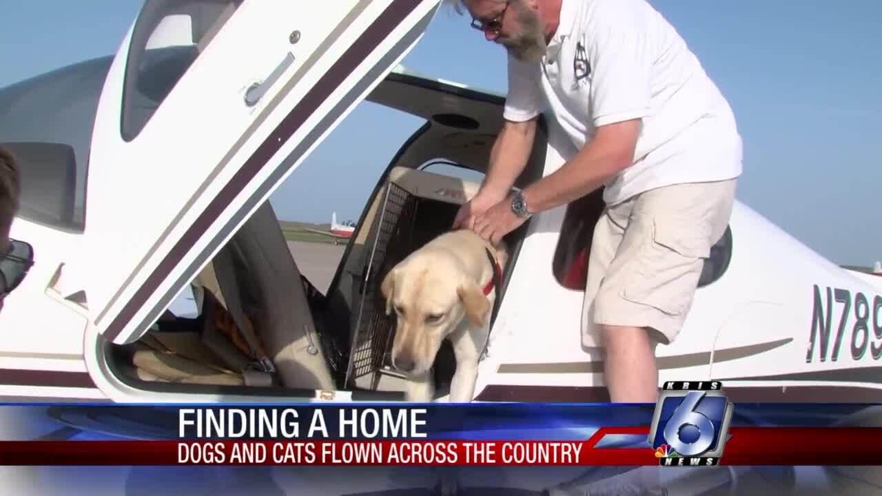 Pilots N Paws works to rescue, transport pets to new homes