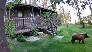 fwp bear in yard