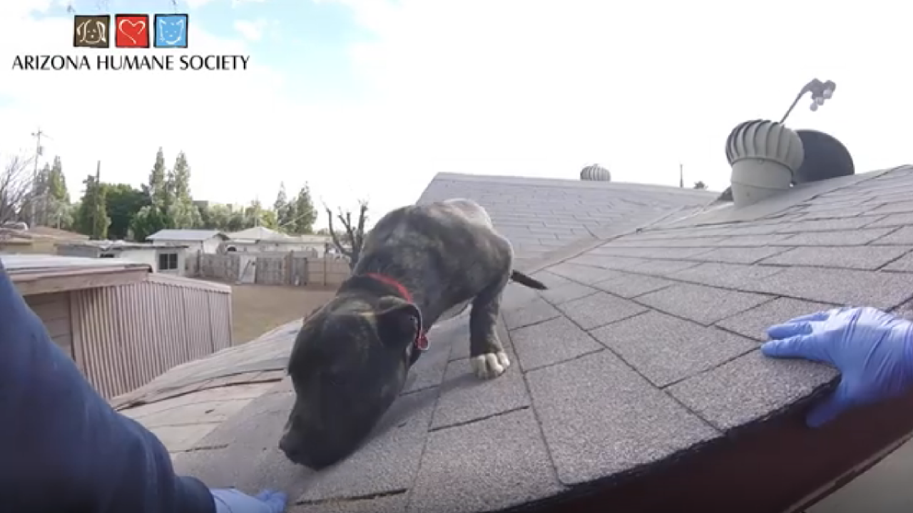 Arizona Humane Society 'Rufio' rescued from Phoenix roof