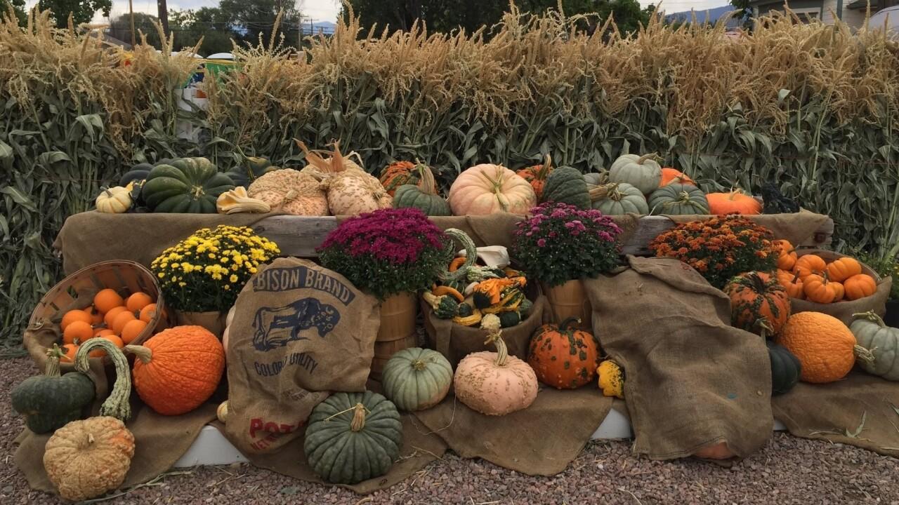 Carol Gebhart Diane's Pumpkin Patch Canon City