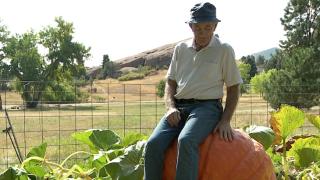 jack slade pumpkins.png