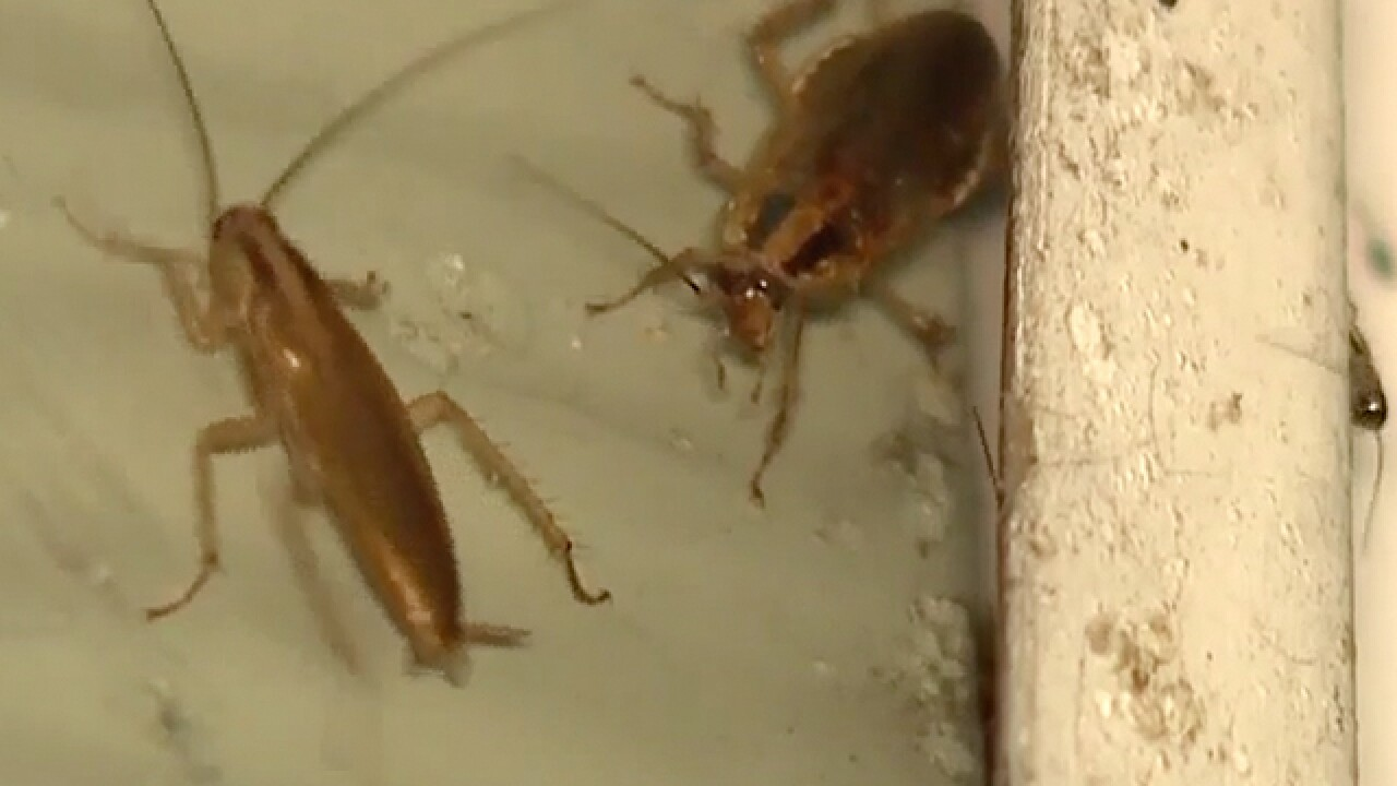 Cockroaches take over Elyria homes