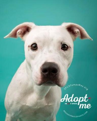 PHOTOS: 20+ adoptable pets in the Tampa Bay area for the weekend of October 26