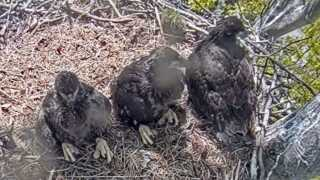 Avon Lake eagles.jpg