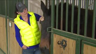 Elizabeth animal sanctuary in jeopardy after land owner decides to sell property