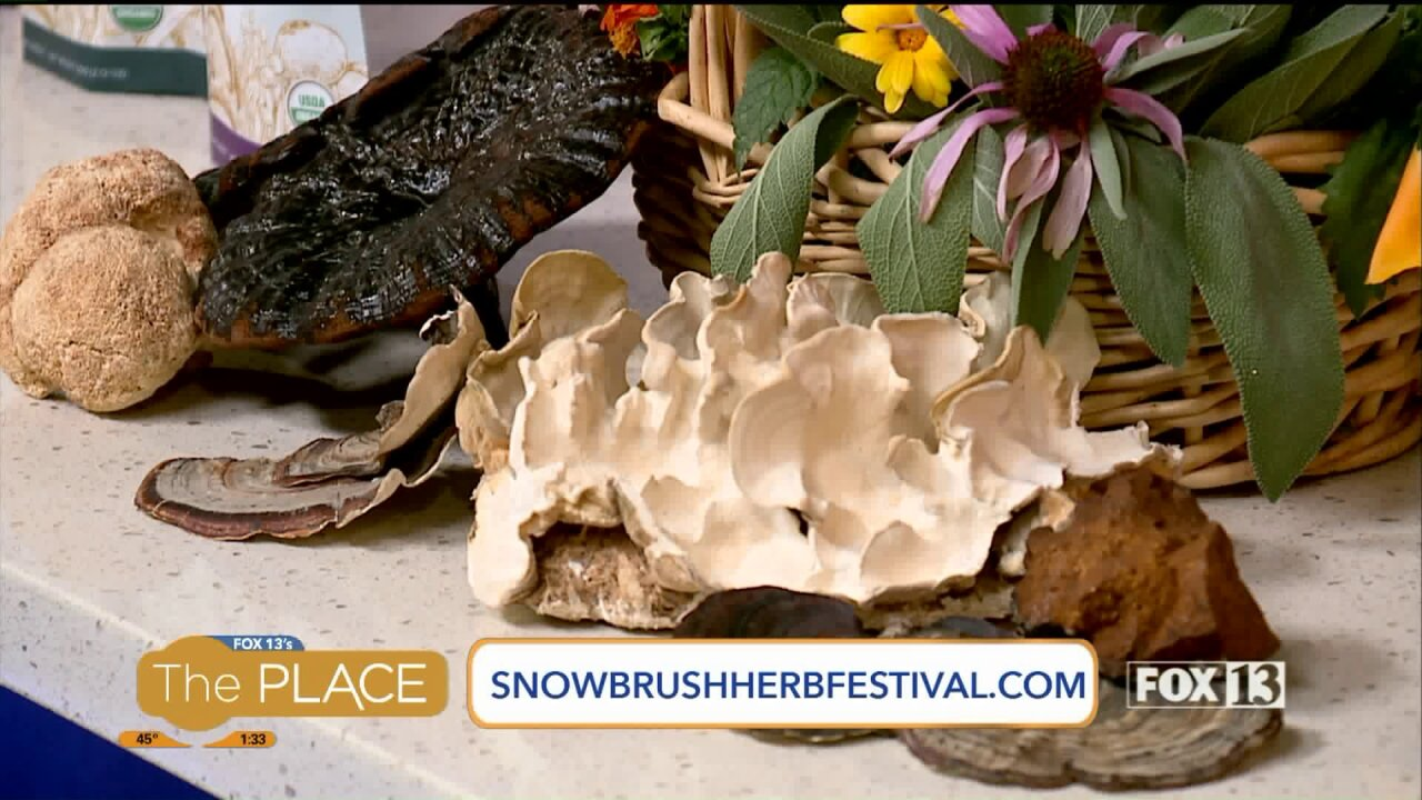 Granola…with mushrooms? Participants of the SnowBrush Herb Festival explain how, and why!
