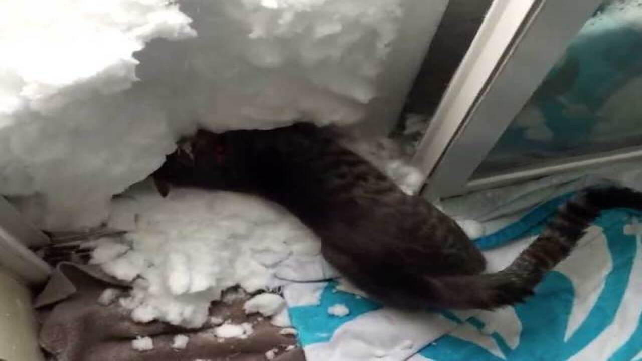 WATCH: Cat builds a snow igloo after Colorado blizzard