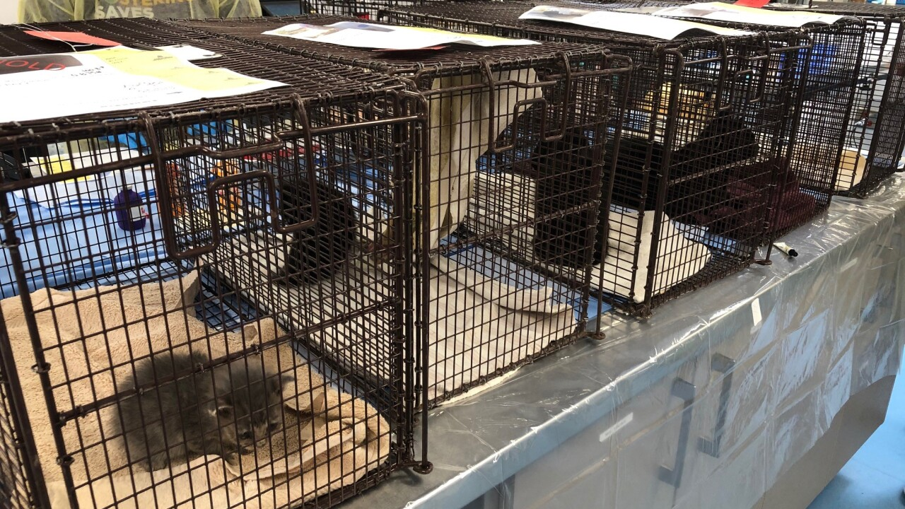 2 dozen cats, kittens rescued from RV in Pima County