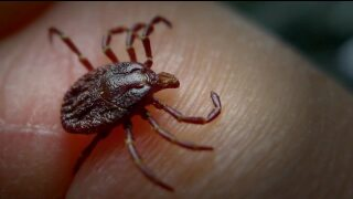 Let's talk ticks: What's the risk?