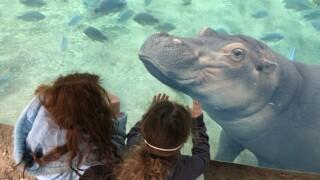 Cincinnati Zoo Fiona Exhibit.jpg