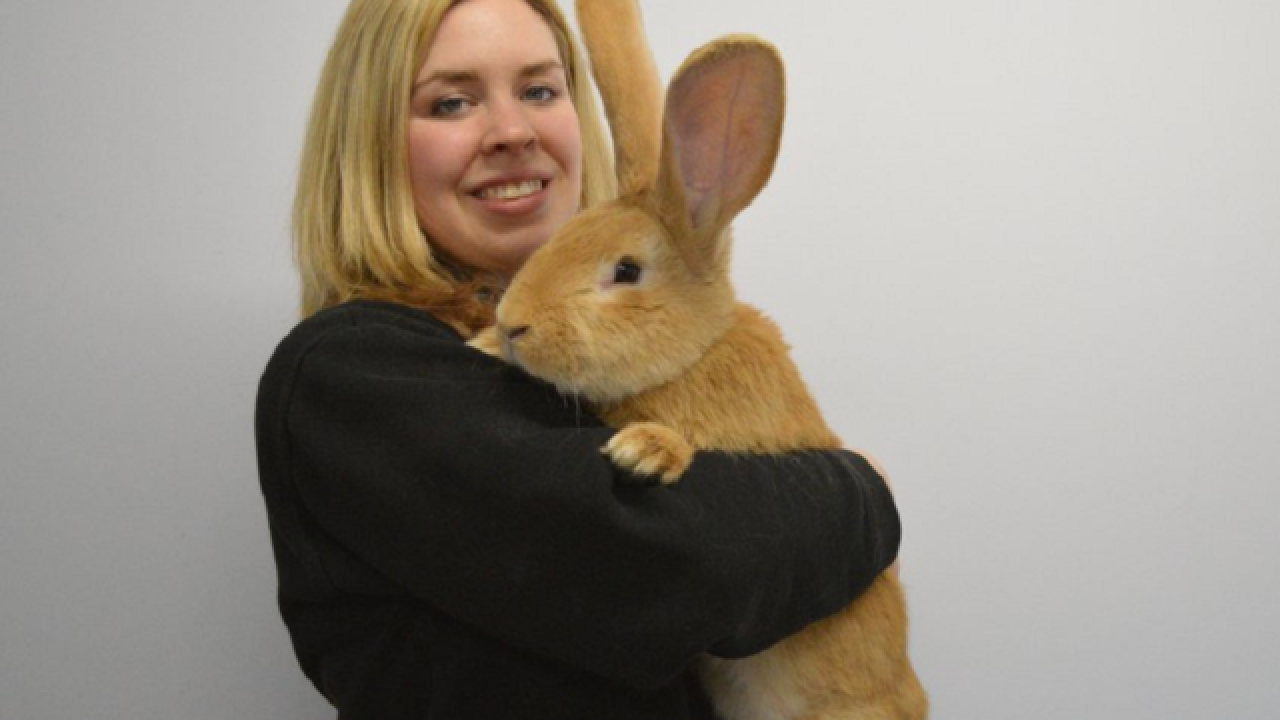 Dog-sized rabbit searches for new home