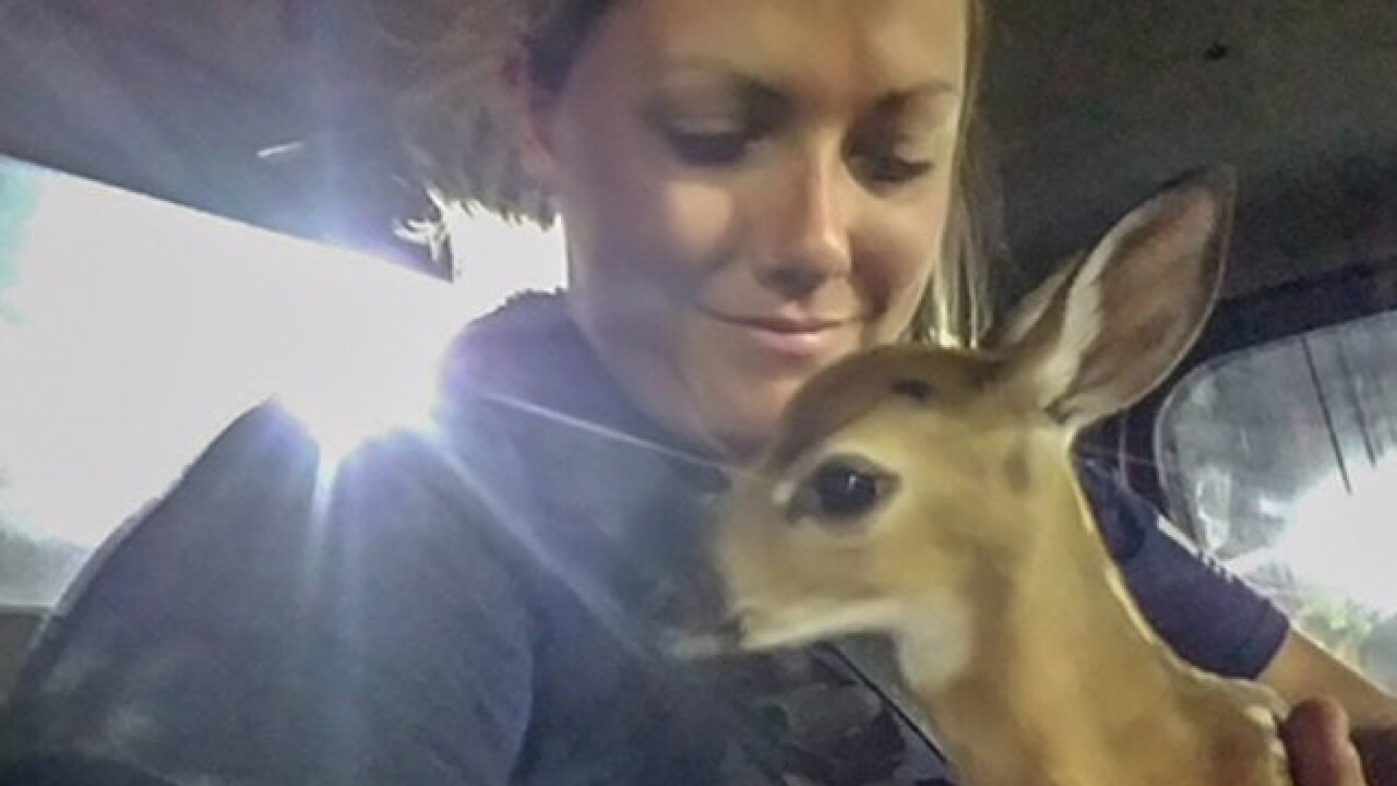Key deer fawn rescued from brush fire