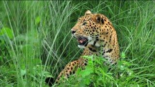 Hogle Zoo record: three big animal escapes since1999