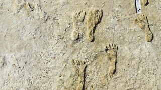 North America Oldest Fossil Footprints