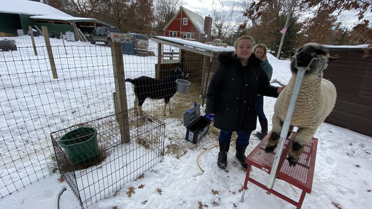 Sisters Sheep Shearing Business Photo