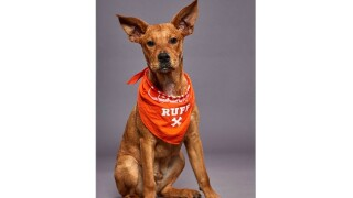 Michigan dog selected to compete in Puppy Bowl XVI
