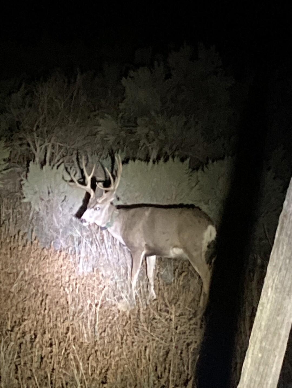 Mule Deer Buck Hammock