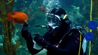 scripps aquarium 10_1496265262965_60476041_ver1.0_640_480.jpg
