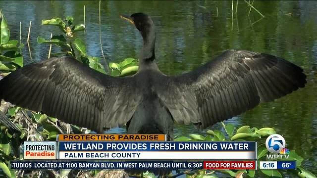 PBC wetlands created through nearby wastewater facility