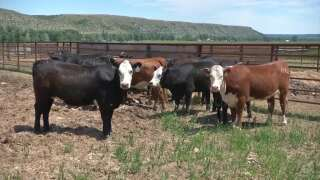 Montana Ag Network report for Tuesday, April 14