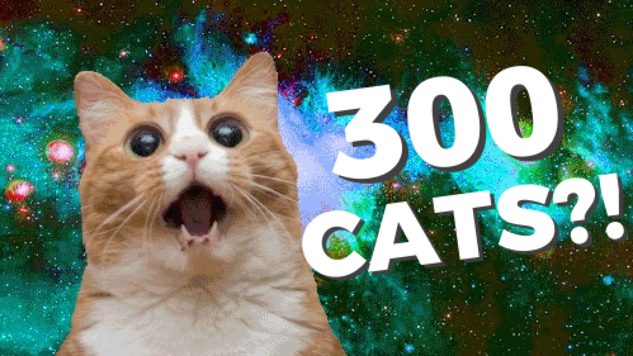 300 CATS!.png