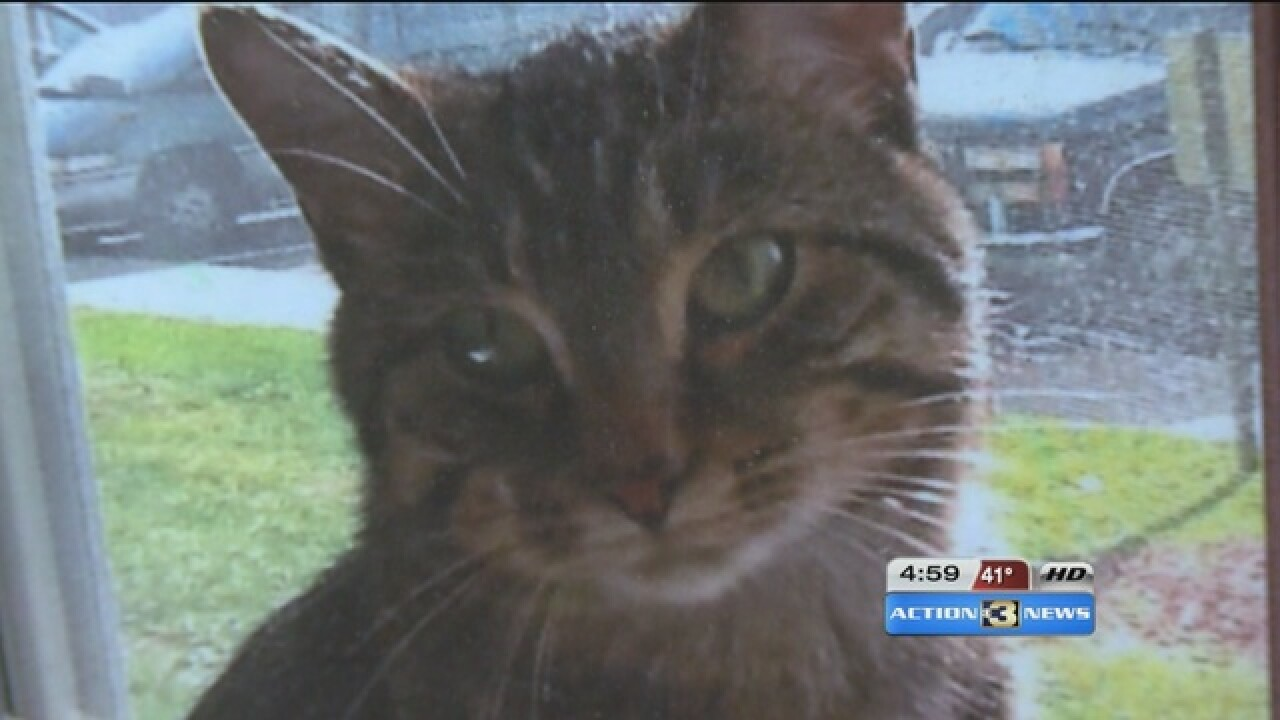 Cat dies after being shot with arrow