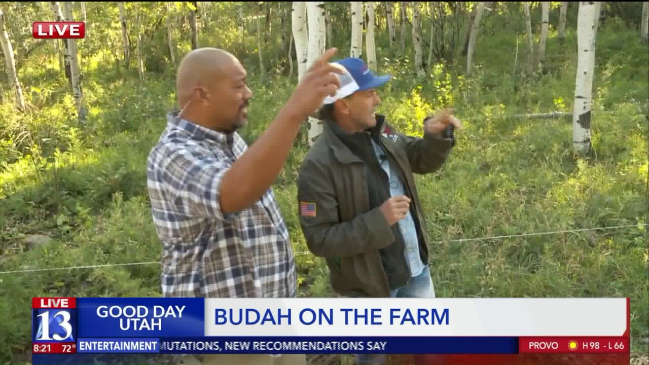 Big Budah at Bill White Farms &Ranches