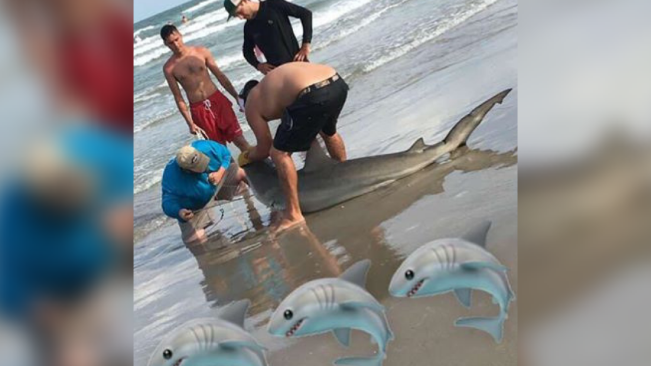 Local fisherman reel in a shark