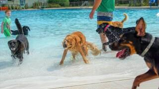 dog swim.jpg