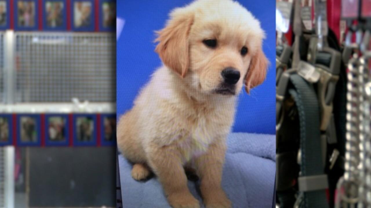 Golden Retriever Puppy Stolen From Santee Pet Shop