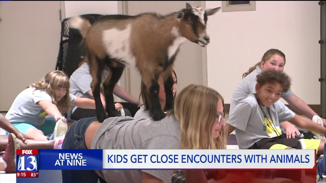 'HERO Camp' gives kids a chance to try 'goatyoga'