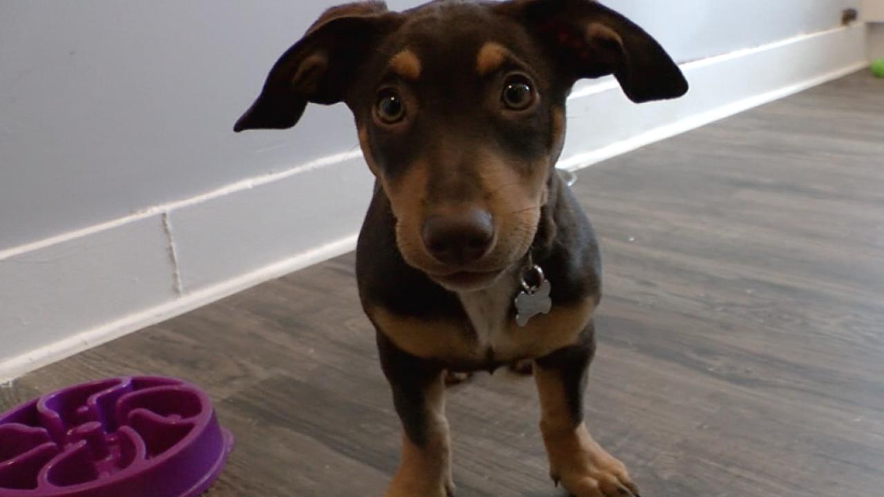 Veterinarian Dr. RutAnn Lobos says pet owners often overlook oral health