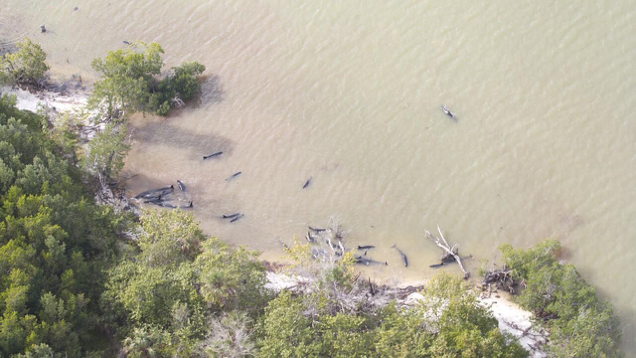 Nearly 100 dolphins dead along Florida coast