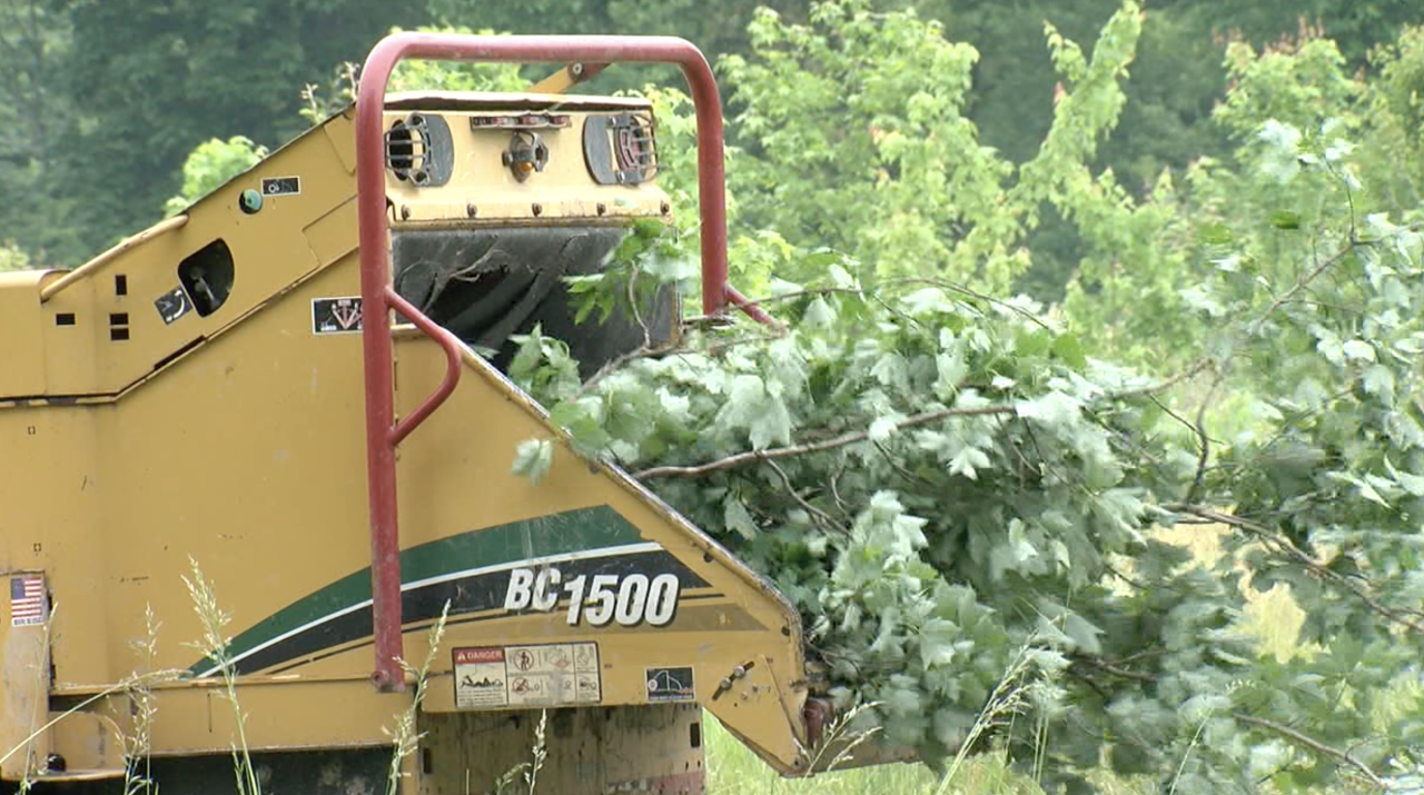Tree crews loaded infested trees into a wood chipper on June 2 at Tom Brown's farm.