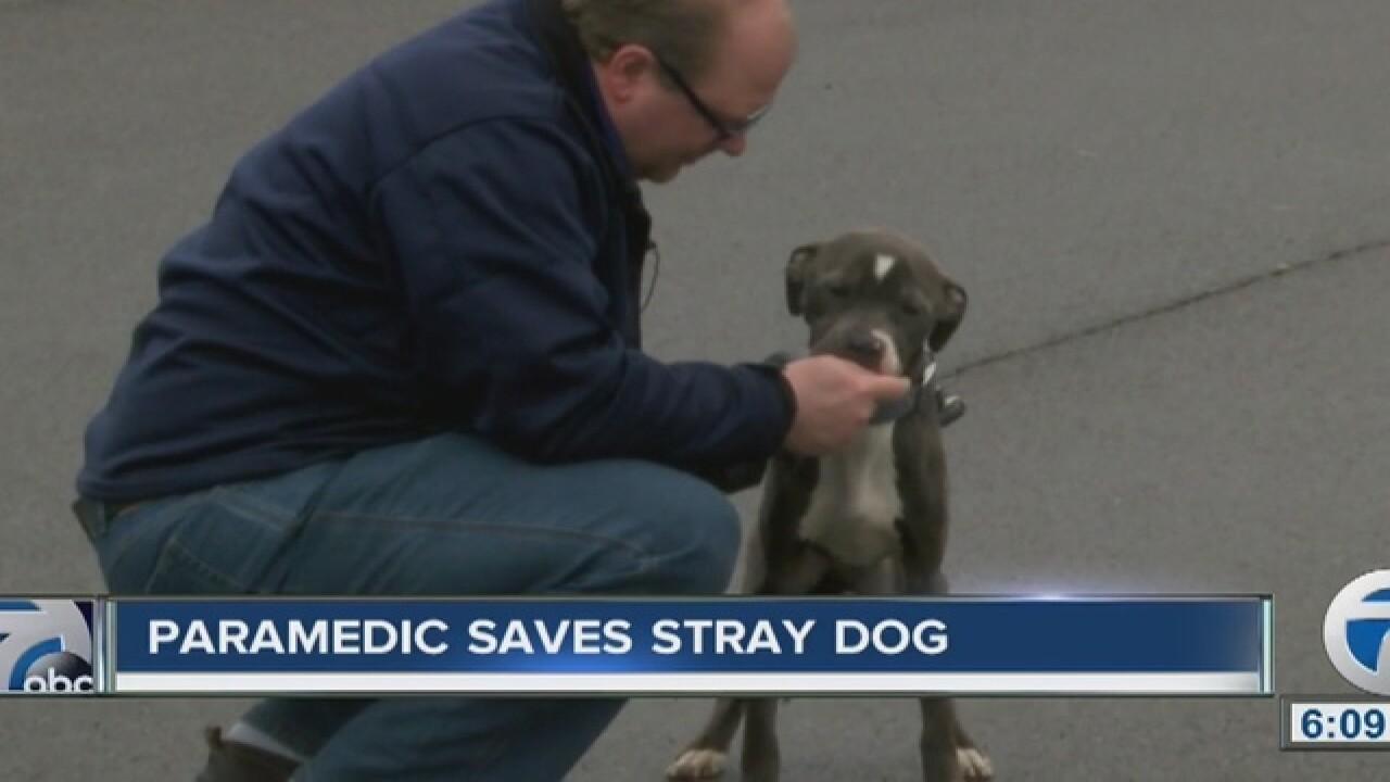 Rural Metro paramedic saves stray dog