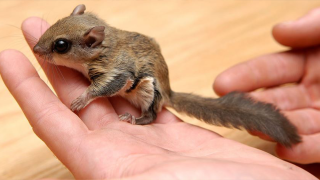 flying-squirrels-fwc-photo1.png