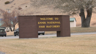 Madison County Sheriff's Office still looking for suspects in hatchery vandalism