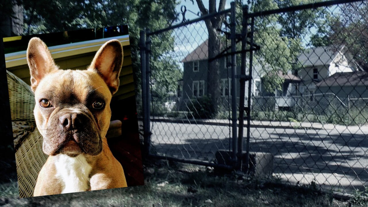 Family says their French Bulldog was stolen for a 2nd time from their front yard