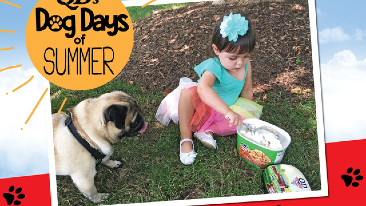 Quality Dairy Celebrates with Dog Days of Summer with Ice Cream Contest