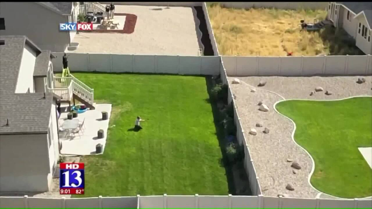 Aerial footage shows wildlife officials tranquilizing cougar in backyard in Tooele