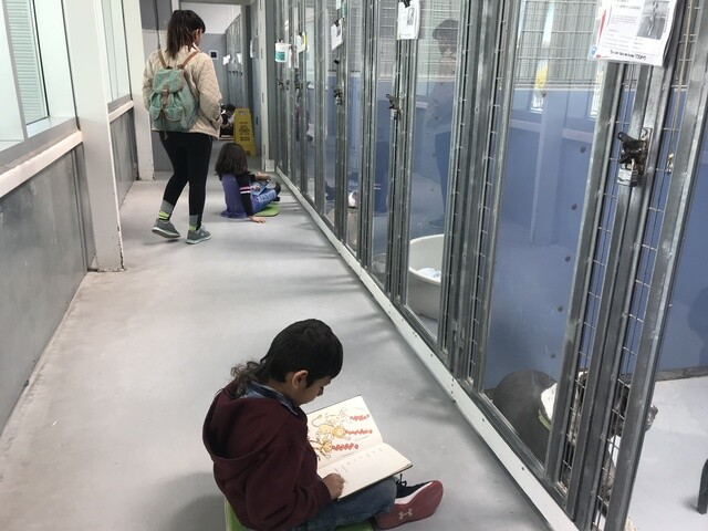 PHOTOS: CCSD first graders read to dogs in kennels