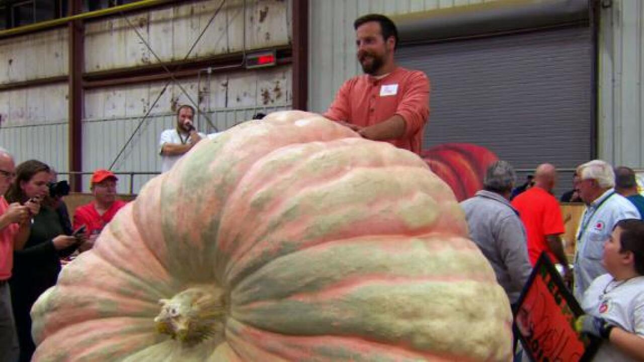 This record-breaking pumpkin is heavier than a small car and big enough to fit inside
