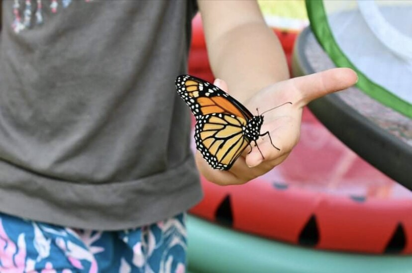 Monarch butterfly resting on a child's hand