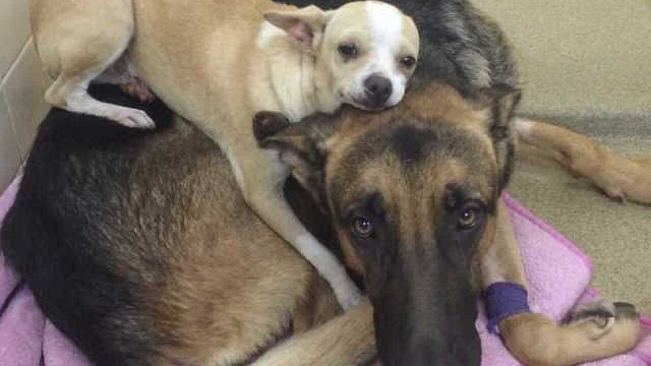 """Odd couple"" dogs looking for a forever home"