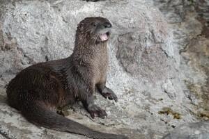 Fisher at Otter Creek (148).jpg