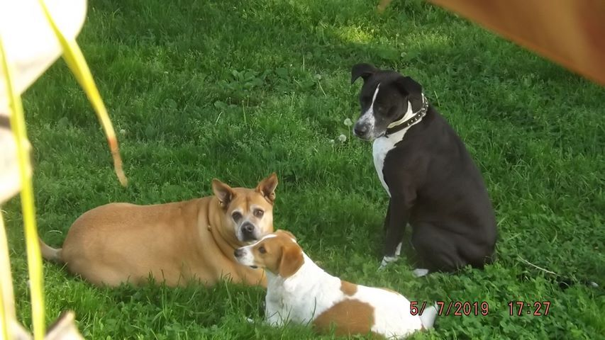 Electra, KnuckleHead and Biscuits