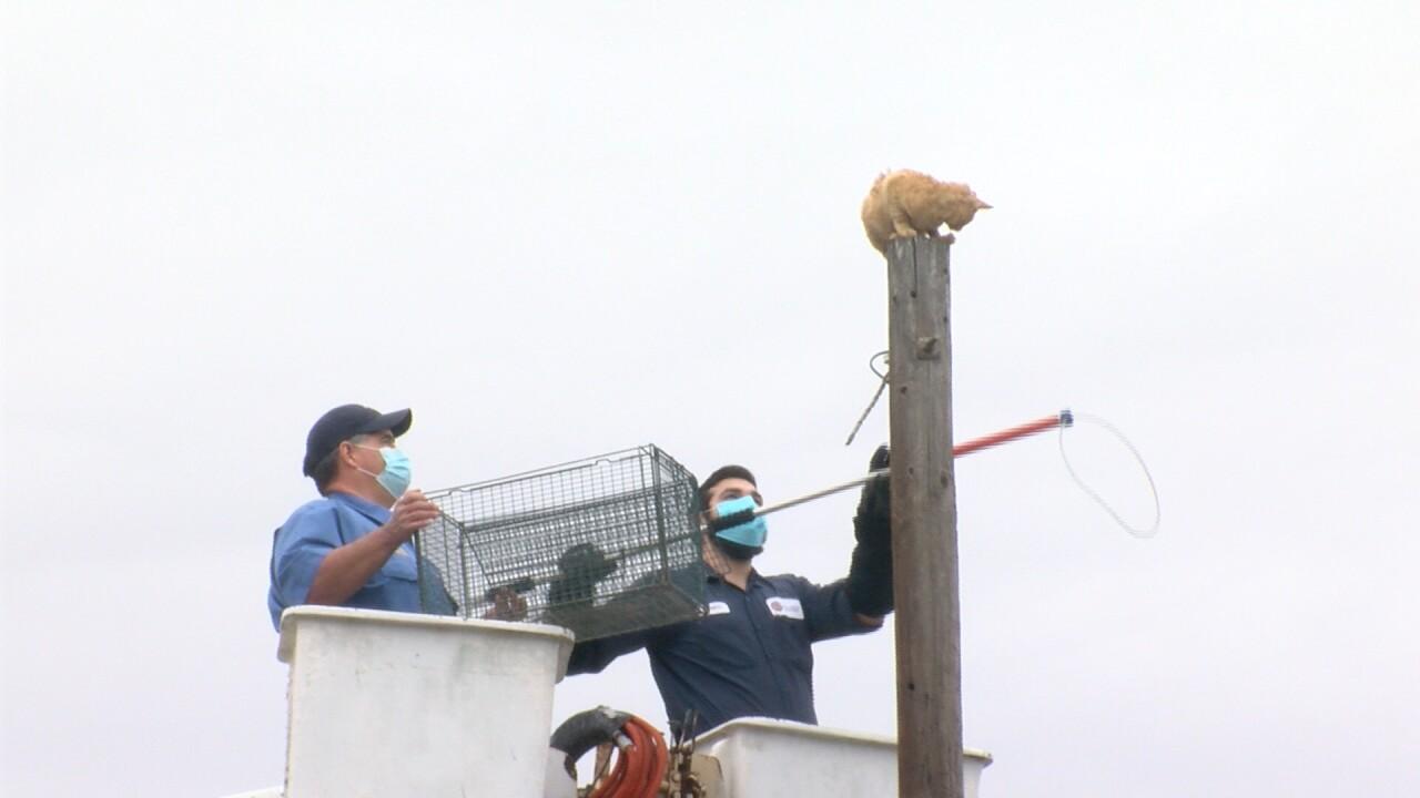 Kingsville cat on a pole.jpg