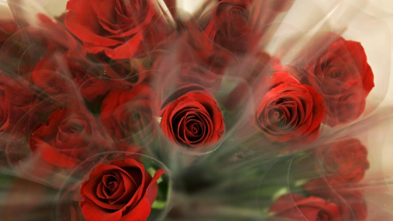 AP A PA USA Valentine Roses