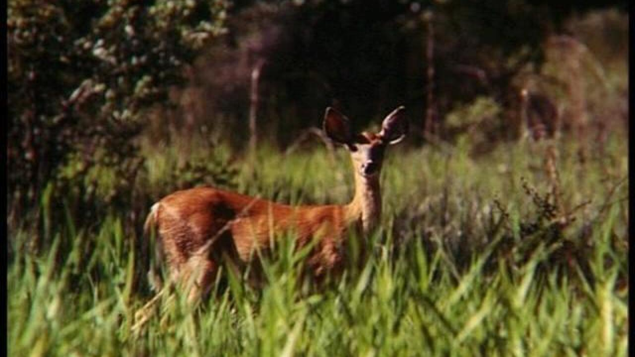 Hunters kill more than 200,000 deer in 9 days
